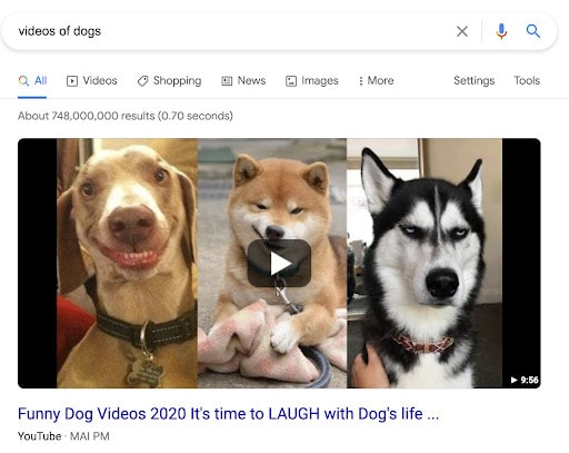 """An example of video search results for """"videos of dogs."""""""